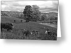 Congregating Cows. Jenne Farm Cow Reading Vermont Black And White Greeting Card