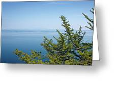 Coniferous Trees On Blue Sky Background Greeting Card by Sergey Taran