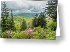 Conifers And Blooms Greeting Card