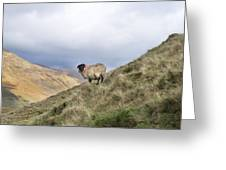 Connemara Sheep Greeting Card