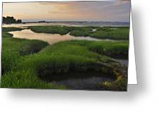 Conomo Point Marsh Grass Greeting Card