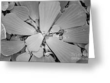 Conservatory Nature In Black And White 1 Greeting Card