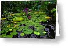 Conservatory Waterlilies Greeting Card