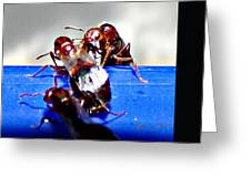 Consider The Ants 2 Of 3 Greeting Card