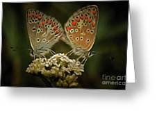 Contact - Detail Of The Butterflies Greeting Card
