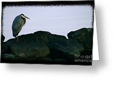 Contemplating Heron Greeting Card