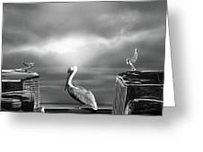 Contemplating The Pelican Greeting Card