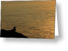 Contemplation I Greeting Card