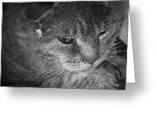 Contemplation Of Thumbody In Black And White Greeting Card