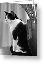 Contemplative Cat Black And White Greeting Card