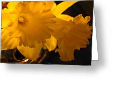 Contemporary Flower Artwork 10 Daffodil Flowers Evening Glow Greeting Card