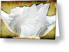 Contemporary White Iris Greeting Card