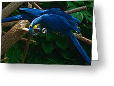 Contorted Parrots Greeting Card