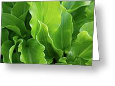 Contoured Leaves Greeting Card