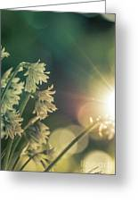 Contra Jour Flowers 1 Greeting Card