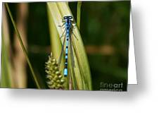 Contrast Alive Greeting Card