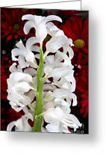 Contrasting Red And White Flowers Greeting Card