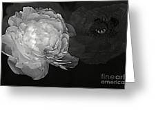 Contrasts In Floral Kingdom In Black And White. Greeting Card