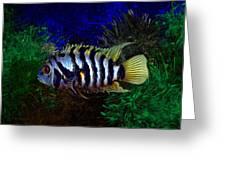 Convict Cichlid Fish Greeting Card
