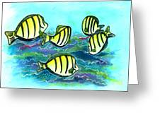 Convict Tang Fish #209 Greeting Card