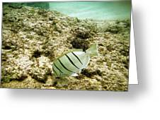 Convict Tang Greeting Card