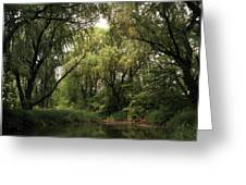 Cook County Forest Preserve No 6 Greeting Card