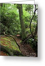 Cook Forest Greeting Card