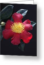 Cookie Cutter Camellia Greeting Card