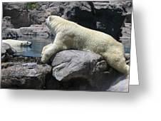 Cool Bears Greeting Card