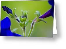 Cool Blue Fuzzy Feeling Greeting Card