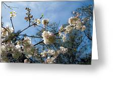 Cool Cherry Blossoms Greeting Card