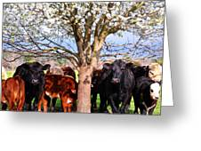 Cool Cows Greeting Card