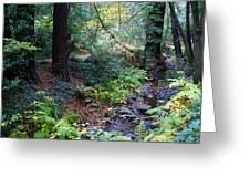 Cool Creek On Mt Tamalpais Greeting Card