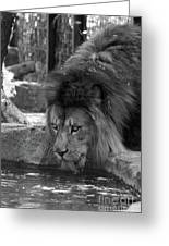 Cool Drink Of Water  Black And White  T O C Greeting Card