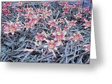 Cool Sunset Field Of Tiger Lillies Greeting Card