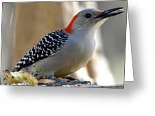Cool, Woodpeckers Like Sunflower Seeds Greeting Card