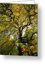 Coole Park Tree Galway Ireland Greeting Card