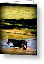 Cooling Off Greeting Card