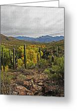 Coon Creek Looking South Greeting Card