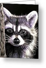 Coon Greeting Card by Janet Moss