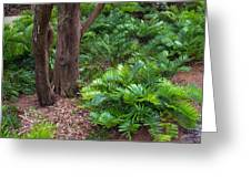 Coontie  Florida Arrowroot Or Indian Breadroot Greeting Card