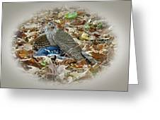 Cooper's Hawk - Accipiter Cooperii - With Blue Jay Greeting Card