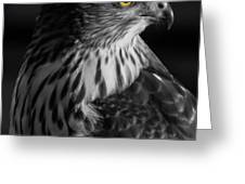 Coopers Hawk Bw Greeting Card