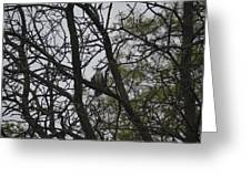 Cooper's Hawk Perched In Tree Greeting Card