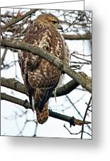 Coopers Hawk Winter Greeting Card