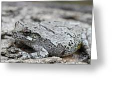 Cope's Gray Tree Frog #5 Greeting Card