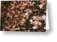 Copper Beech Greeting Card