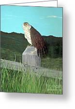 Copper Hawk Greeting Card
