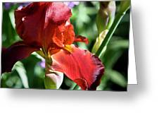 Copper Iris Squared 1 Greeting Card