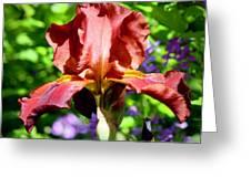 Copper Iris Squared 5 Greeting Card
